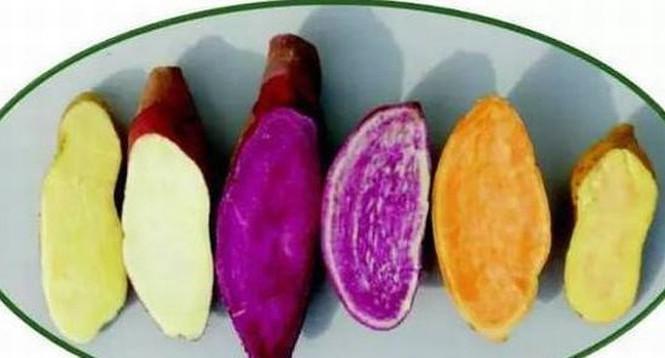 Những đại kỵ khi ăn quả hồng, cần biết để khỏi mang họa-4