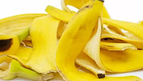9 công dụng của vỏ chuối khiến bạn ăn xong không còn muốn vứt vỏ nữa