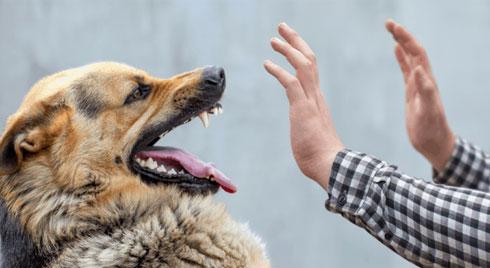 Cách sơ cứu đúng cách khi bị chó cắn, tránh nguy cơ mắc bệnh dại