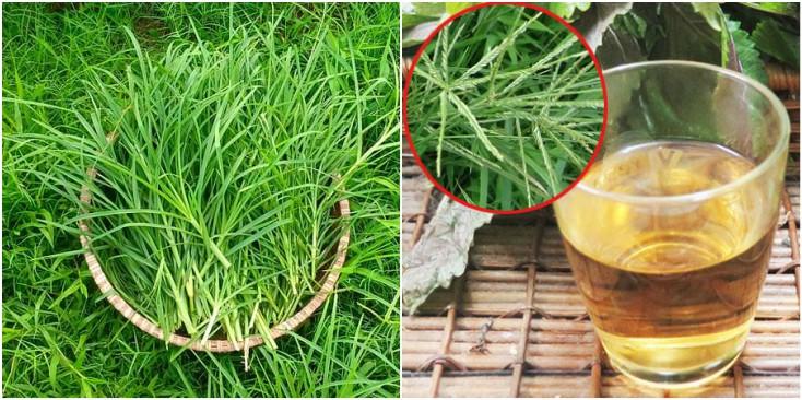 Những công dụng tuyệt vời từ cỏ mần trầu không phải ai cũng biết-2