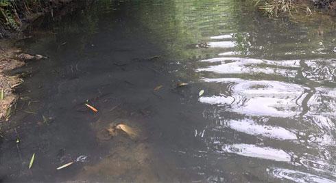 Triệu tập người nghi liên quan đến việc đổ dầu trộm, gây ô nhiễm nguồn nước sông Đà