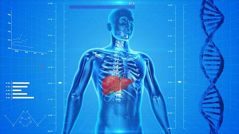 Tổng hợp 6 chức năng của gan quan trọng nhất đối với cơ thể