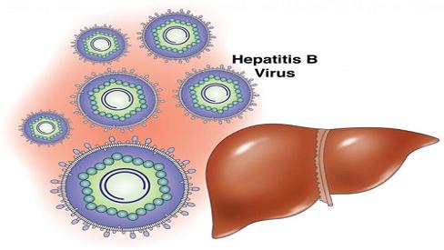 Virus viêm gan B là gì và tỷ lệ tự thải trừ bệnh hiện nay