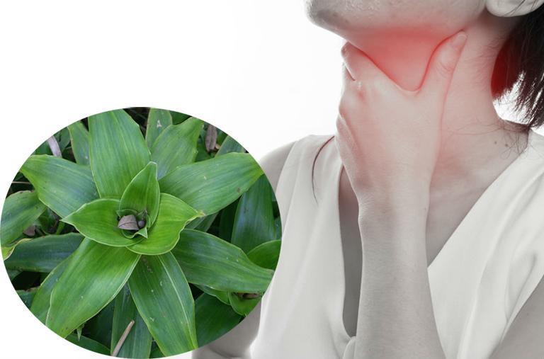 Tác dụng chữa bệnh của cây lược vàng-2