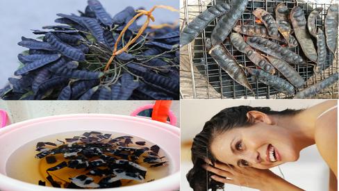 Chăm sóc tóc bằng bồ kết giúp mái tóc đen mượt và sạch gàu hiệu quả