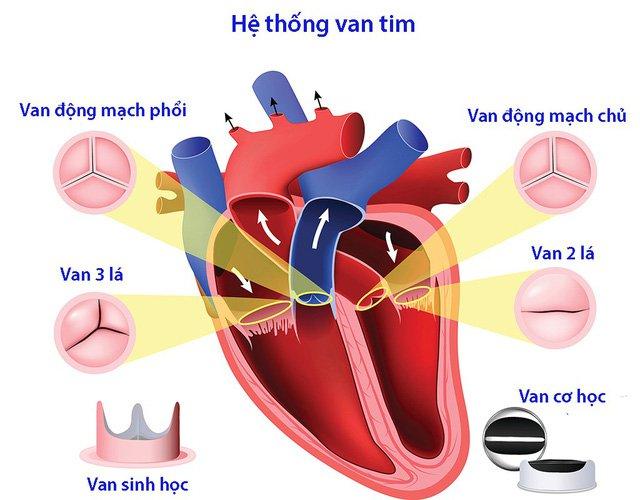 Điều trị bệnh tim ở người cao tuổi: Cần giải pháp phù hợp-1