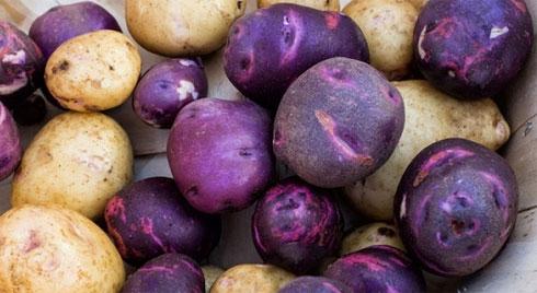 Khoai tây tím: 7 lợi ích không thể ngờ đến