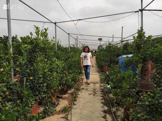 Nhà vườn hốt bạc nhờ những chậu bonsai chuột cõng quất-1