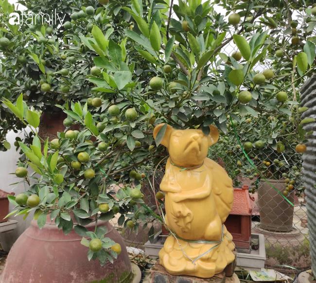 Nhà vườn hốt bạc nhờ những chậu bonsai chuột cõng quất-4