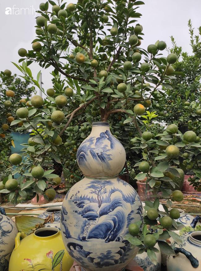 Nhà vườn hốt bạc nhờ những chậu bonsai chuột cõng quất-11