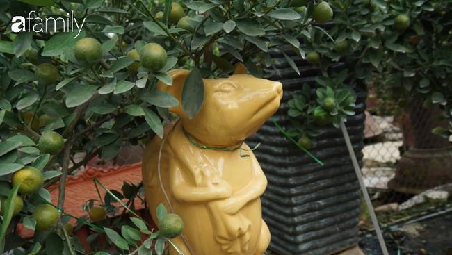 Nhà vườn hốt bạc nhờ những chậu bonsai chuột cõng quất-6