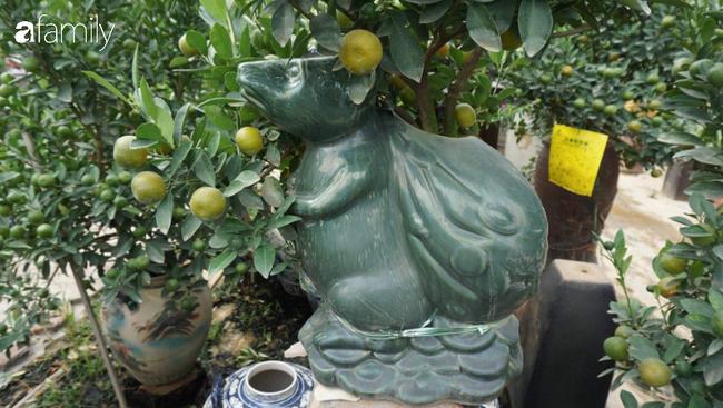 Nhà vườn hốt bạc nhờ những chậu bonsai chuột cõng quất-8