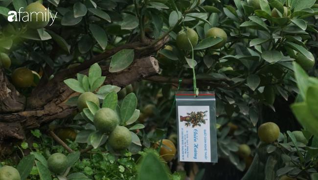 Nhà vườn hốt bạc nhờ những chậu bonsai chuột cõng quất-14