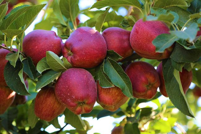Điều kỳ diệu gì sẽ xảy ra khi ăn 2 trái táo/ngày: Những tác dụng khiến chị em tiếc hùi hụi vì không biết sớm hơn-3