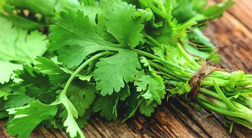3 điều tối kỵ khi ăn rau mùi bạn cần hạn chế ăn nếu không muốn mắc bệnh ung thư