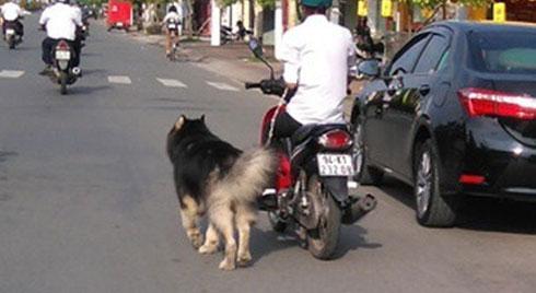 Từ 1/1/2020: Dắt chó đi dạo trên đường bằng xe máy sẽ bị xử phạt 200.000 đồng