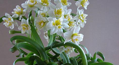 Những loại hoa có thể khiến mất trí nhớ thậm chí gây chết người rất nhanh