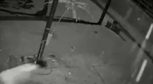 """Clip gay cấn: """"Vồ ếch"""" 2 lần, chủ nhà vẫn kịp giật lại chiếc SH bị trộm giữa đêm"""