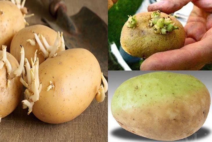 Cảnh báo những người tuyệt đối kiêng ăn khoai tây dù không phải là chiên rán-3