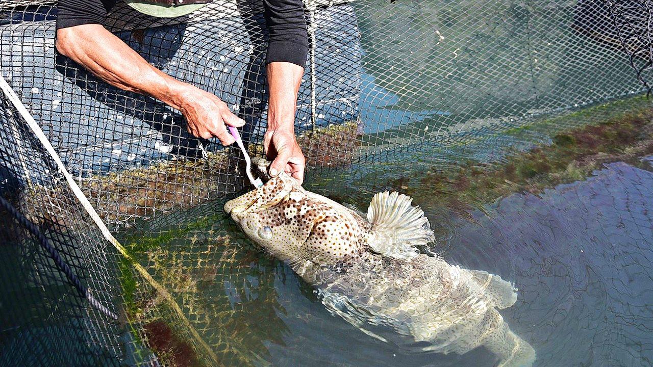 Tận mắt ngắm chú cá song kỳ lạ, không thích ăn chỉ thích đánh răng mỗi sáng