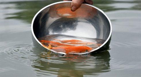 Nhiều người thả nhầm loại cá tiễn ông Công ông Táo, chuyên gia tư vấn cách làm chuẩn nhất