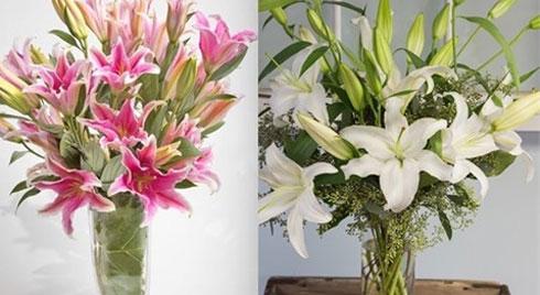 Bí quyết chọn hoa ly, giữ hoa tươi lâu ai cũng thích
