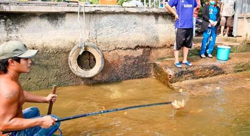 Cá cúng ông Táo bị chích điện ngay trước mặt người thả ở TP.HCM