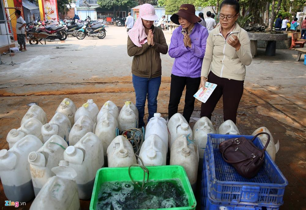 Cá cúng ông Táo bị chích điện ngay trước mặt người thả ở TP.HCM-2