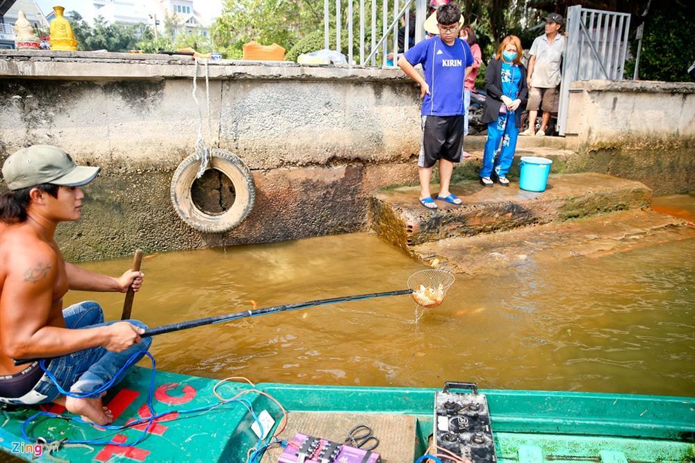 Cá cúng ông Táo bị chích điện ngay trước mặt người thả ở TP.HCM-5