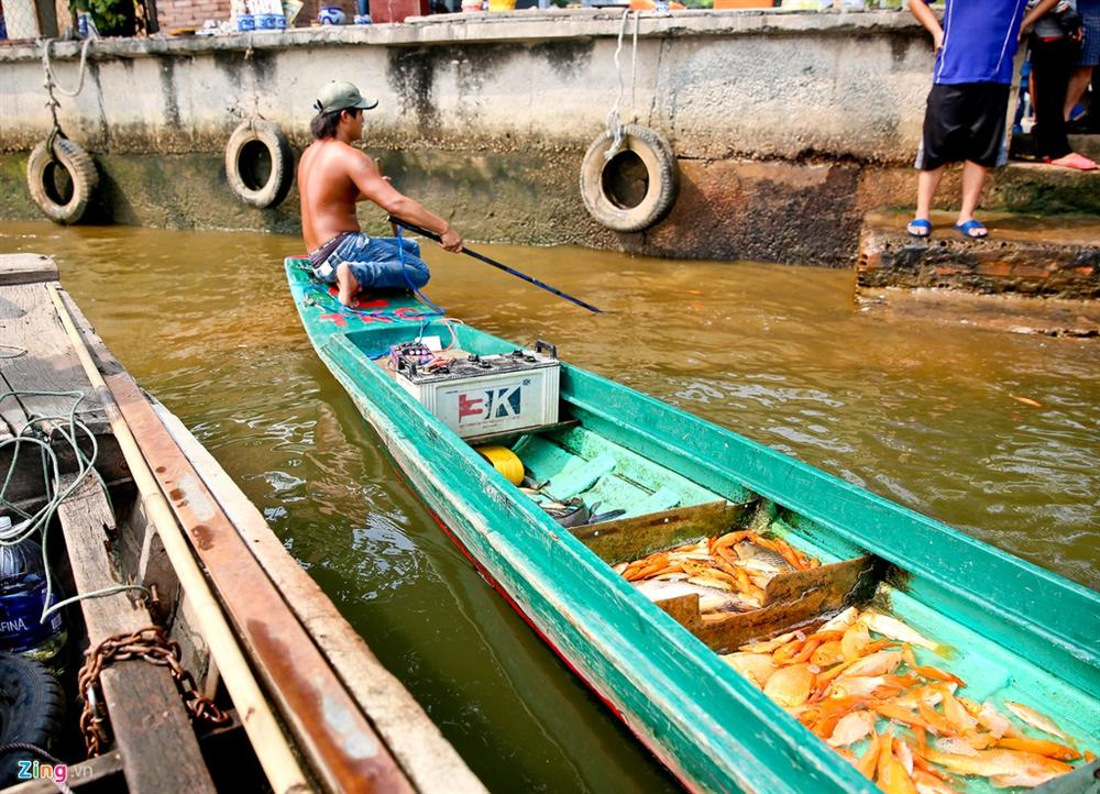 Cá cúng ông Táo bị chích điện ngay trước mặt người thả ở TP.HCM-6