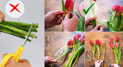 Mẹo giúp hoa nở nhanh, lâu tàn và đẹp nhất chuẩn bị đón Tết
