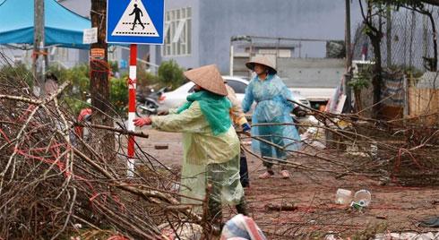 Hà Nội: Mưa gió chiều 30 Tết lại bị ép giá, người buôn đào quất quyết vặt trụi hoa quả và bỏ lại