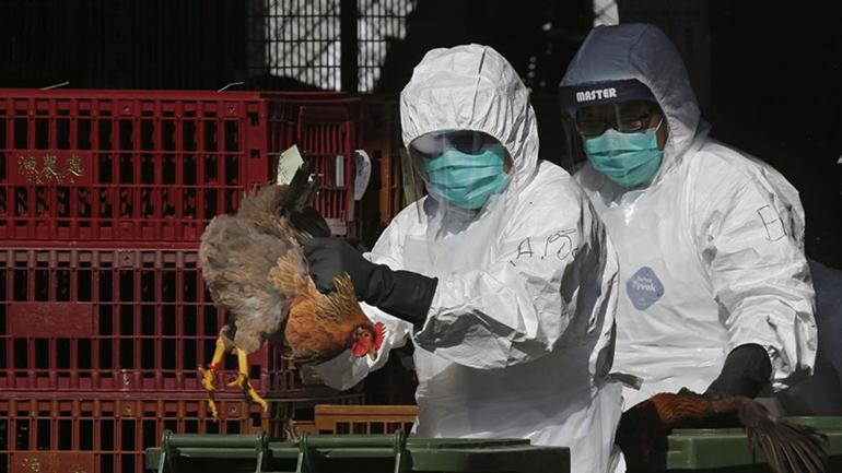 Cúm gia cầm H5N1 bùng phát gần tâm điểm của virus corona tại Trung Quốc