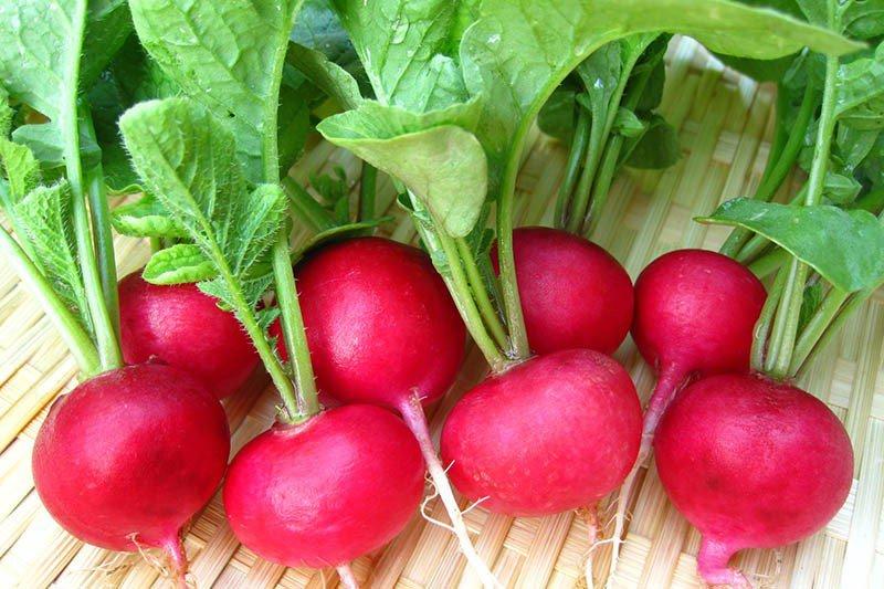 Tác dụng và tác hại của củ cải đỏ khi ăn cần lưu ý-2