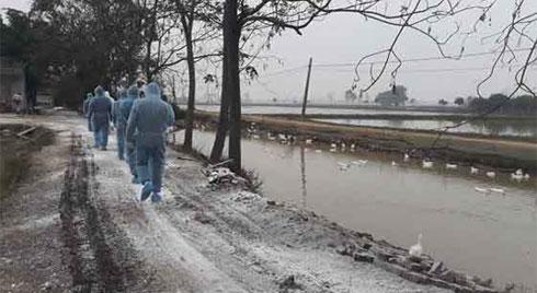 Cám cảnh nơi ổ dịch cúm A/H5N6 đầu tiên phát hiện ở Hà Nội