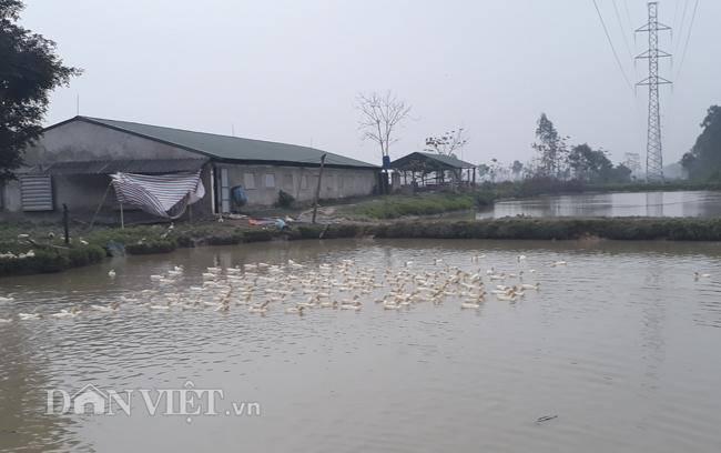 Cám cảnh nơi ổ dịch cúm A/H5N6 đầu tiên phát hiện ở Hà Nội-10