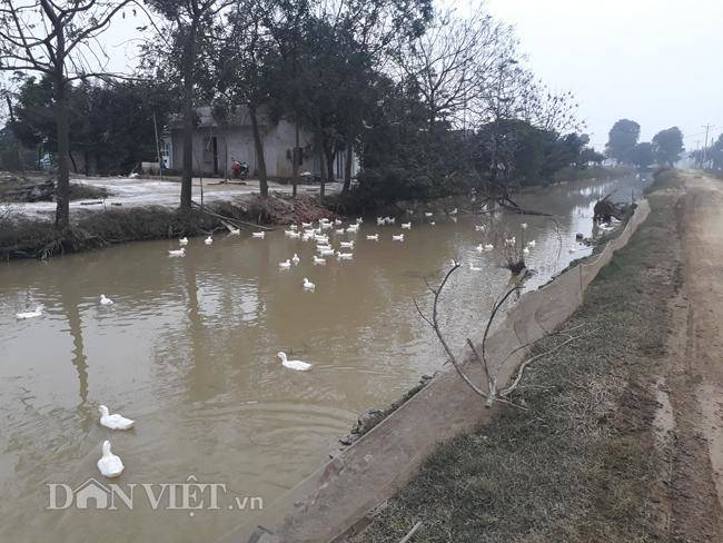 Cám cảnh nơi ổ dịch cúm A/H5N6 đầu tiên phát hiện ở Hà Nội-12