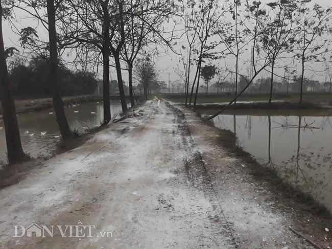 Cám cảnh nơi ổ dịch cúm A/H5N6 đầu tiên phát hiện ở Hà Nội-14