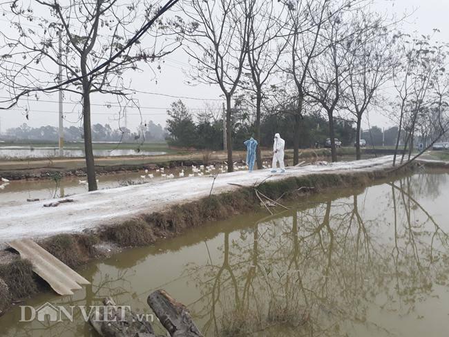 Cám cảnh nơi ổ dịch cúm A/H5N6 đầu tiên phát hiện ở Hà Nội-15