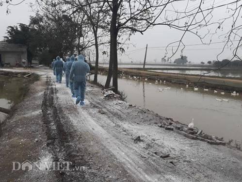 Cám cảnh nơi ổ dịch cúm A/H5N6 đầu tiên phát hiện ở Hà Nội-2