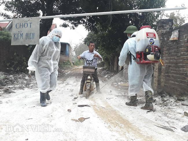 Cám cảnh nơi ổ dịch cúm A/H5N6 đầu tiên phát hiện ở Hà Nội-7