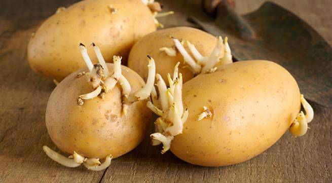 Khoai tây bổ nhưng sẽ thành thuốc độc nếu ăn theo kiểu này-3