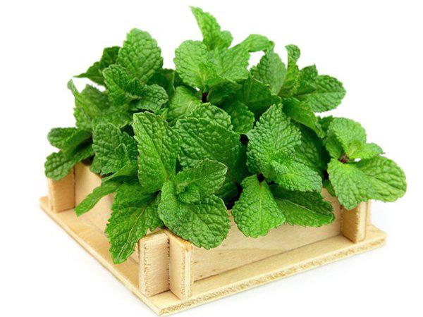 Lưu ngay loạt thực phẩm giúp cơ thể luôn tỏa hương thơm chẳng thua khi dùng nước hoa-3