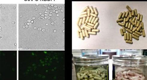 Trung Quốc công bố sản xuất được vaccine uống chống virus COVID-19