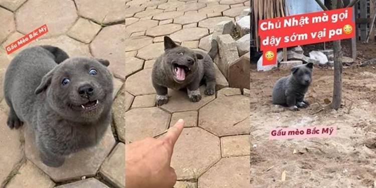 Trong 5 ngày, chú chó Nguyễn Văn Dúi đã trở thành hiện tượng mạng toàn cầu-1