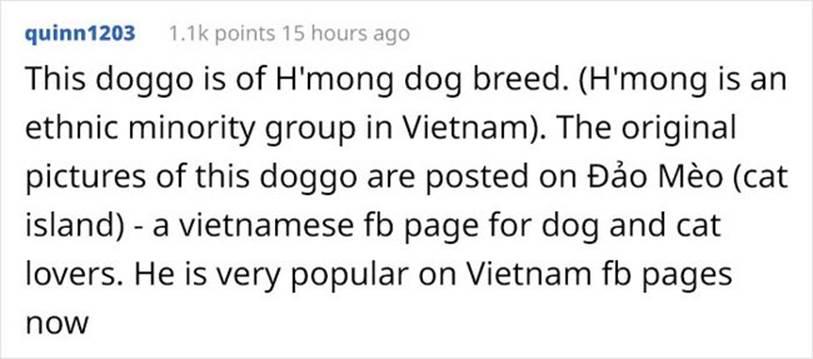 Trong 5 ngày, chú chó Nguyễn Văn Dúi đã trở thành hiện tượng mạng toàn cầu-5