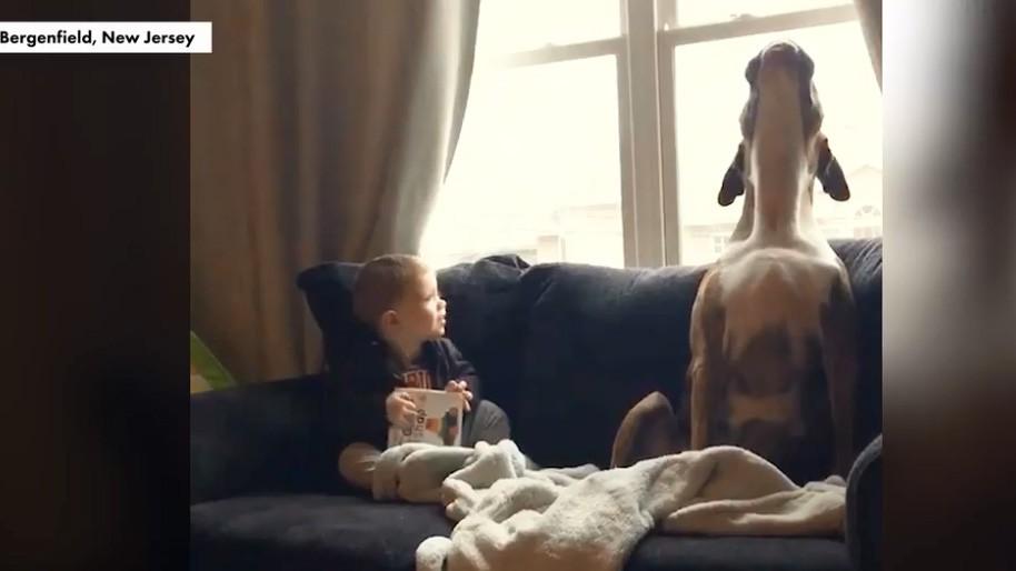 """Bật cười trước màn """"đối đáp"""" siêu đáng yêu của chó cưng và cậu chủ nhỏ"""