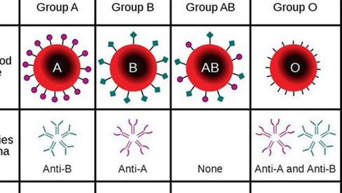 Nhóm máu, kháng thể và khả năng miễn dịch với Covid-19 có liên quan như thế nào?