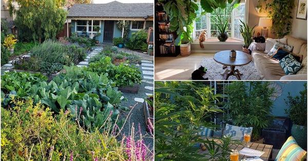 Cuộc sống đáng mơ ước của đôi vợ chồng trẻ bên căn nhà cấp 4 và khu vườn đẹp yên bình