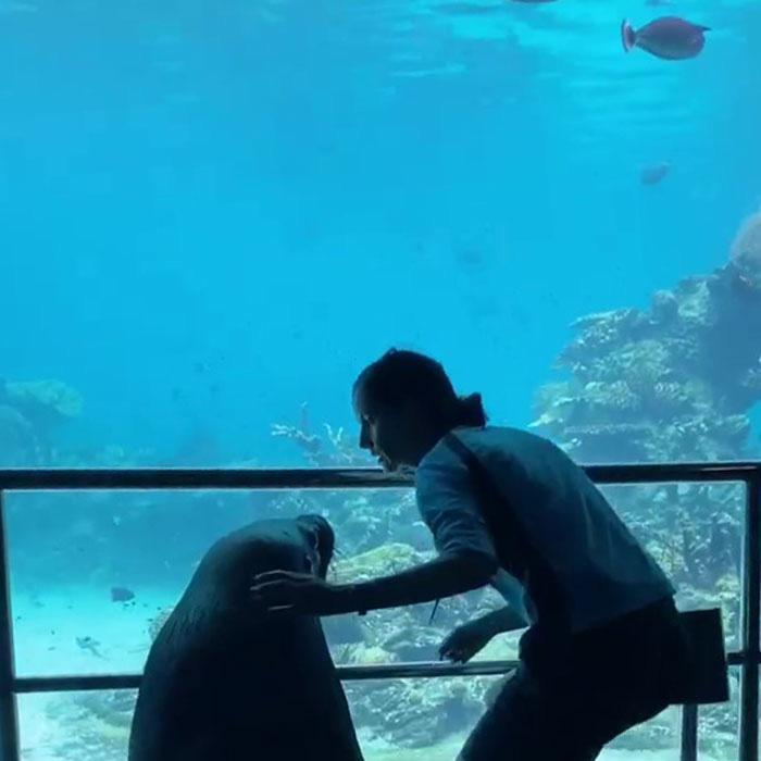 Nối gót chim cánh cụt, hải cẩu cũng làm 1 tour du ngoạn thủy cung cho đỡ buồn chán mùa Covid-19-3